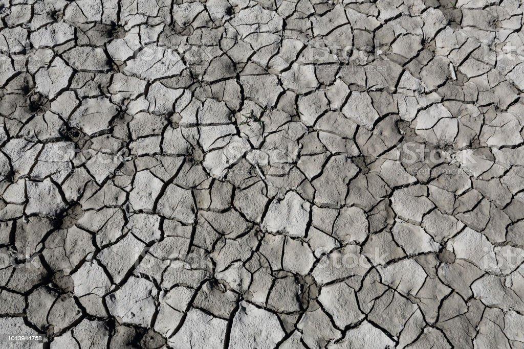 Arcilloso gris agrietado seco disparo verticalmente con algunas huellas de perro durante un día asoleado caliente en el lago artificial del Mediano en el Pirineo Aragonés Español - foto de stock