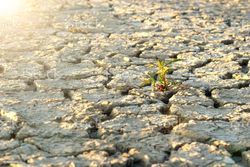 dry cracked soil during drought time stock photo