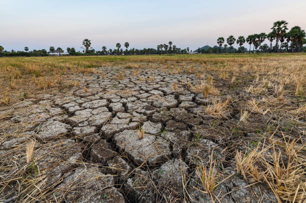 Dry cracked soil ground texture in fields stock photo