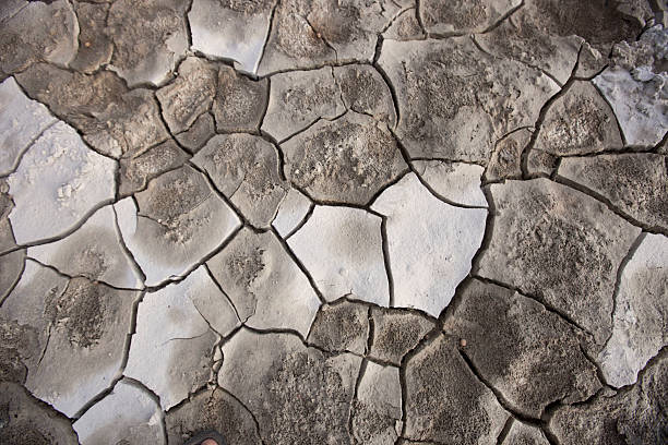 Dry Crust on Lakebed stock photo