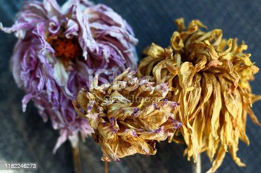 948743278istockphoto dry dahlia flowers on wooden background 1182246273