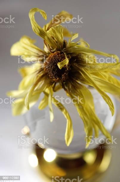 Torra Daisy-foton och fler bilder på Blomkorg - Blomdel