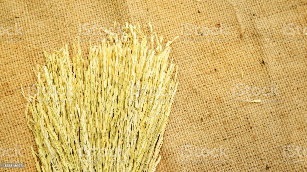 Dry ears of Thai rice on a brown sack. stock photo