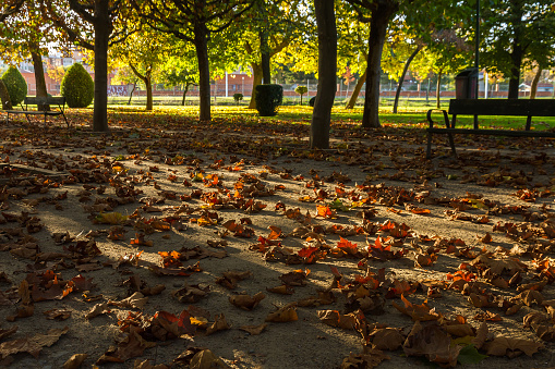 Dry Falls leaves in a park at sunset - Otoño