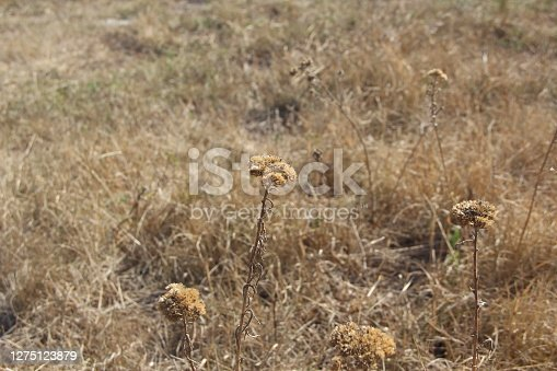 Dry field herbs in autumn on the background of the field