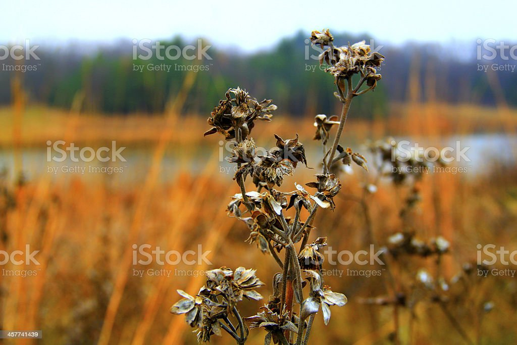Dry Flower with Blurry Background royalty-free stock photo