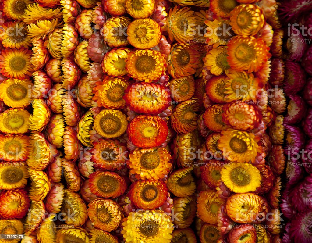 Dry flower wreath. stock photo