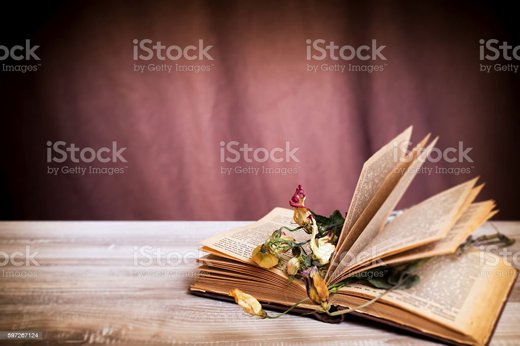 Dry flowers on an old book in a vintage style photo libre de droits