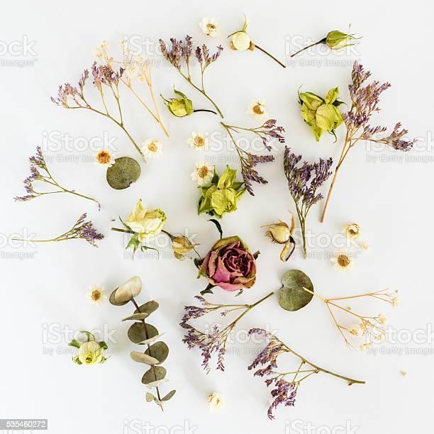 Dry flowers on white background top view flat lay picture id535460272?b=1&k=6&m=535460272&s=612x612&h=abc xc8teuvfhsfqjbzi s4zxi1ufwjneqa9ds8l5vu=