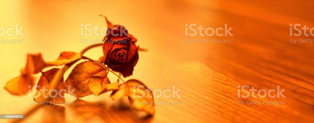 Dry Flowers - Rose stock photo