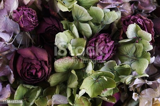 dry flowers roses and hydrangea pattern texture  background close up full frame. toned. top view. low key style. interior poster
