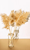 Dry fluffy twigs of common reed or pampas grass in a glass hand-made vase on a white background. Abstract, floral background, minimal and eco-friendly concept