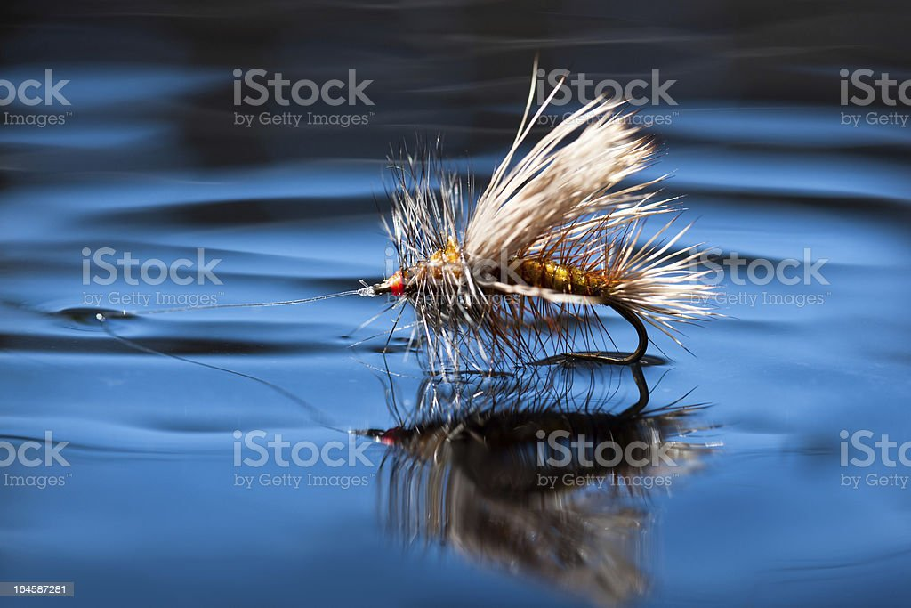 Dry Fly on Water Surface stock photo
