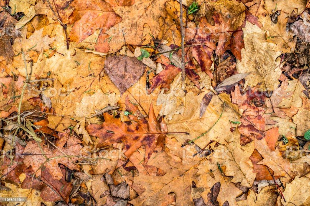 dry foliage- stock photo