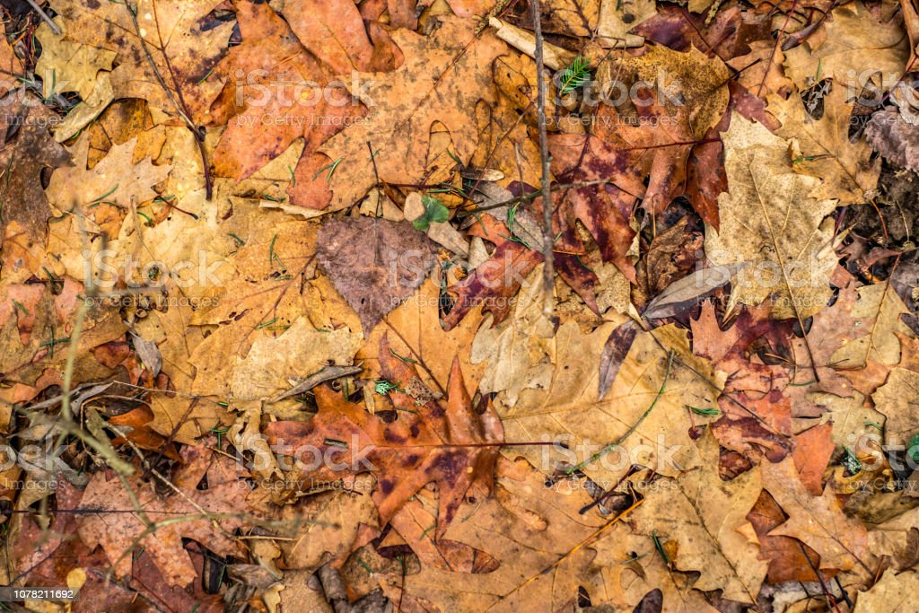 dry foliage stock photo