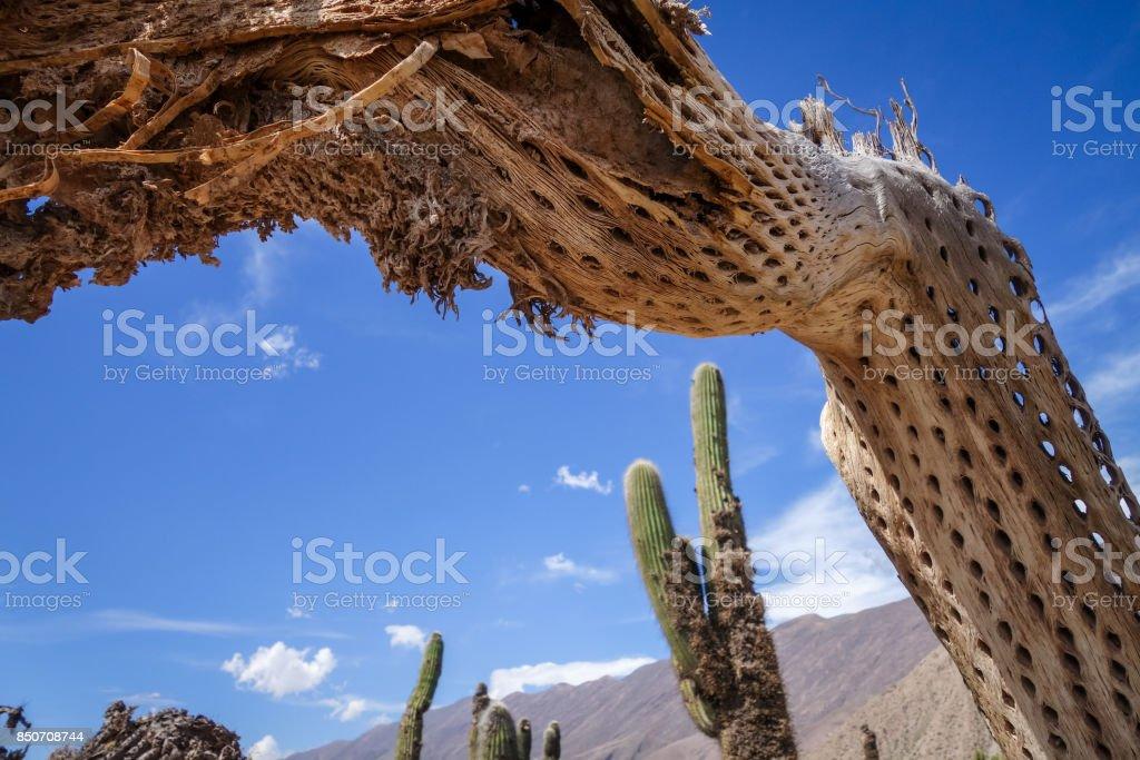 Fotografa de Seco Cactus Gigantes En El Desierto Argentina y ms