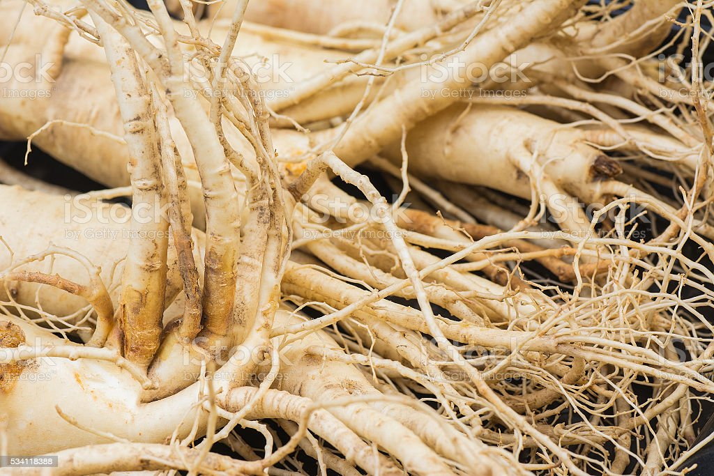 Dry Ginseng Roots. stock photo