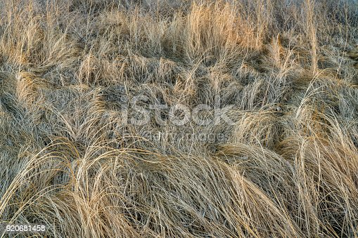 istock dry grass and weeds background 920681458