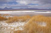 Dry grass by Laguna Cejar. Atacama desert. Chile.