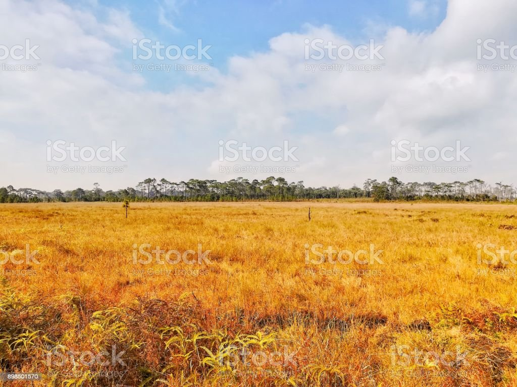 Dry grass field against blue sky in sunny day. stock photo