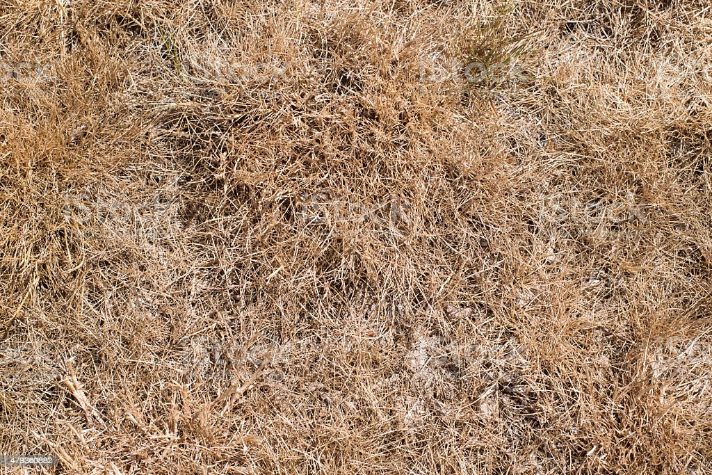 dry grass field as background stock photo