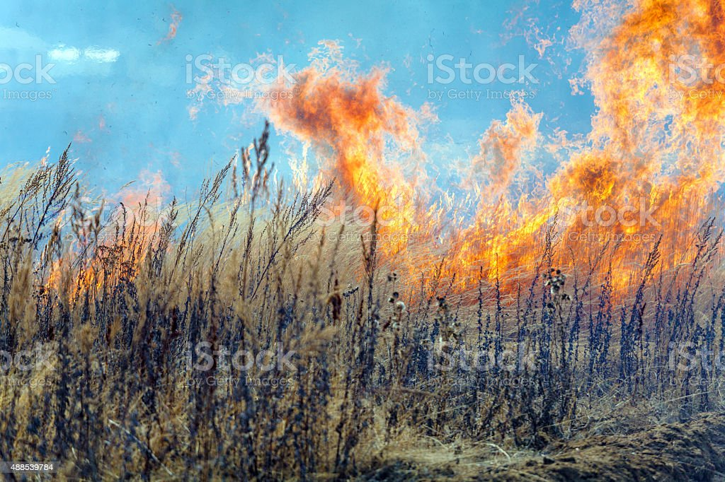 Dry Grass Field Fire Disaster Closeup stock photo