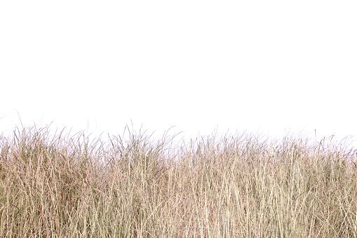 dry grass field.