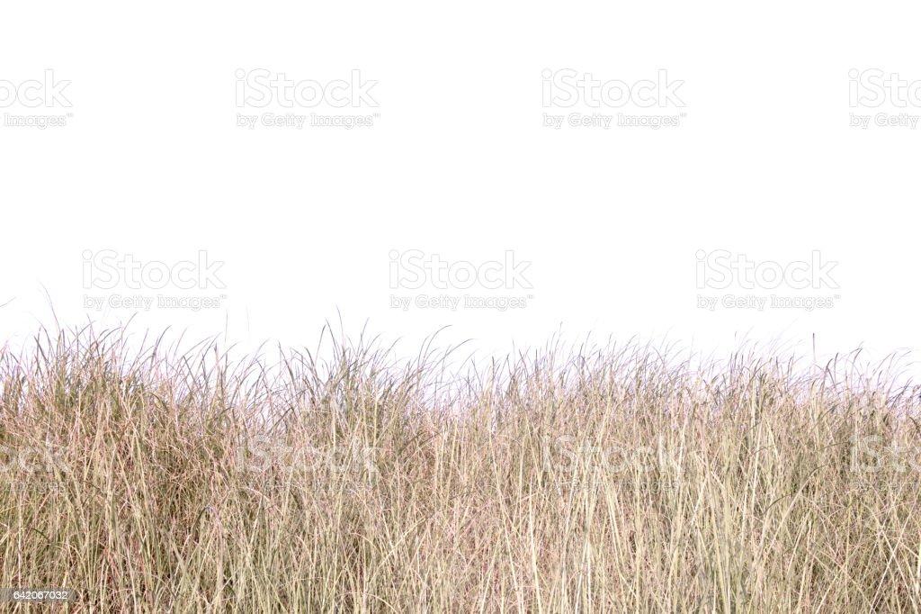 dry grass field. stock photo