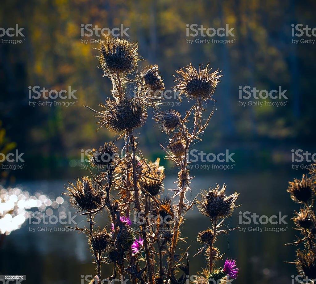 Dry grass field.Autumn breath. stock photo