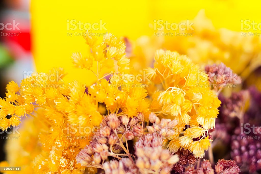 dry grass flower background,selected focus royalty-free stock photo