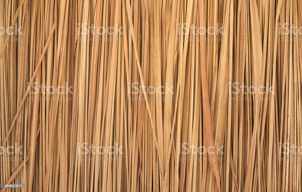 dry grass, Imperata cylindrica Beauv stock photo