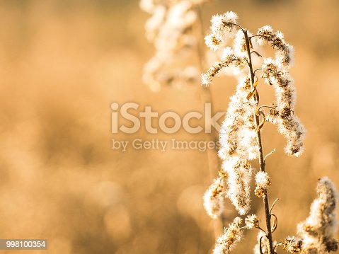 istock Dry Grass in Fall Meadow at Harvest Season 998100354