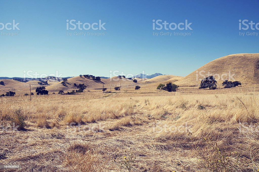 Dry Grass Landscape in Summer stock photo
