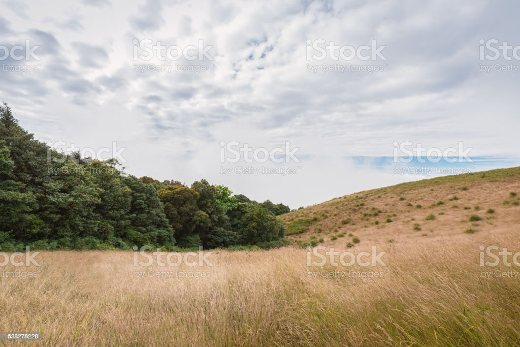 Dry grass meadow on mountain with cloudy sky stock photo
