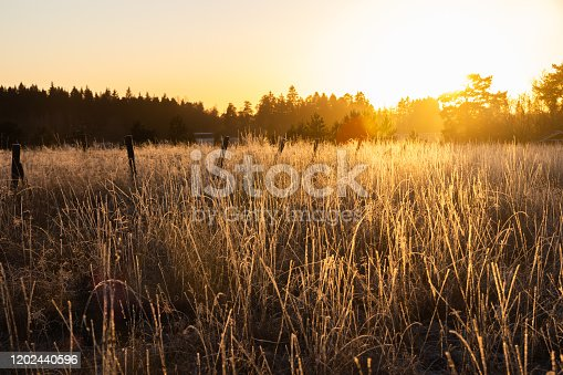 istock Dry grass on field at sunset in winter 1202440596
