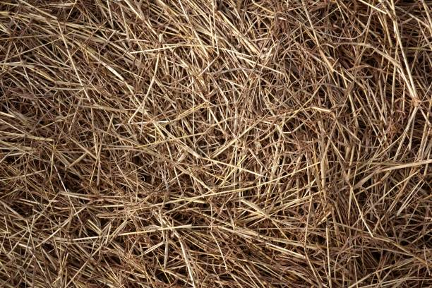 dry grass on the ground close up dry grass on the ground hay stock pictures, royalty-free photos & images