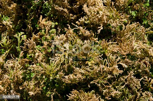 istock Dry Grass 500510179