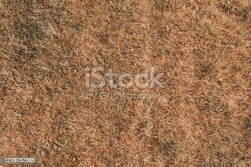 Yellow hay background dry grass texture. Golf or football field. Natural background. Lawn during a drought.