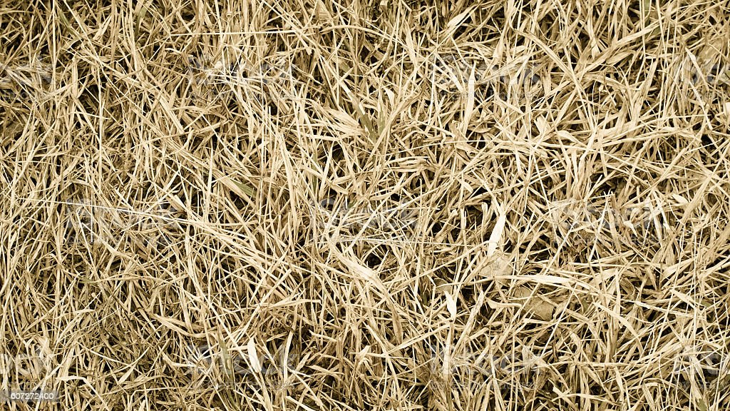 Dry Grass Texture Stock Photo - Download Image Now