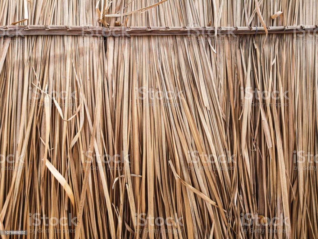 Dry grass to make roof hut. stock photo