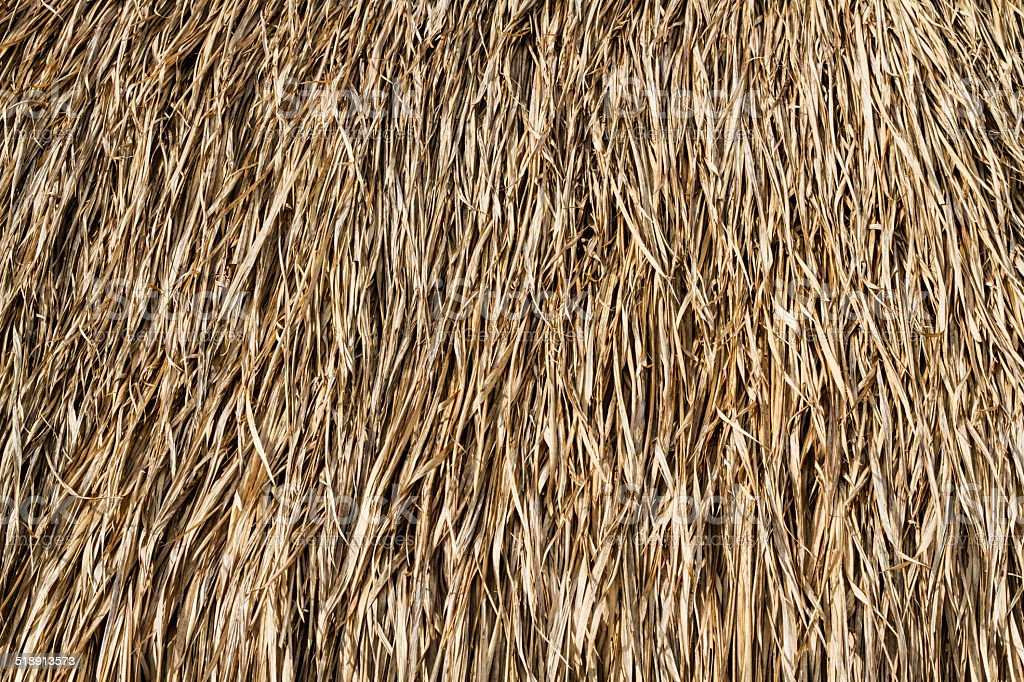 Dry grasses roof stock photo