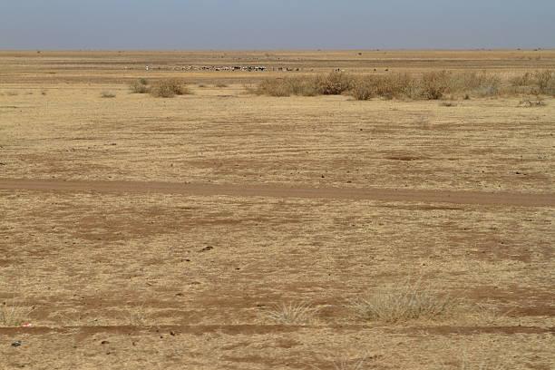 dry grassland in the expanse of sudan - afrikanische steppe dürre stock-fotos und bilder
