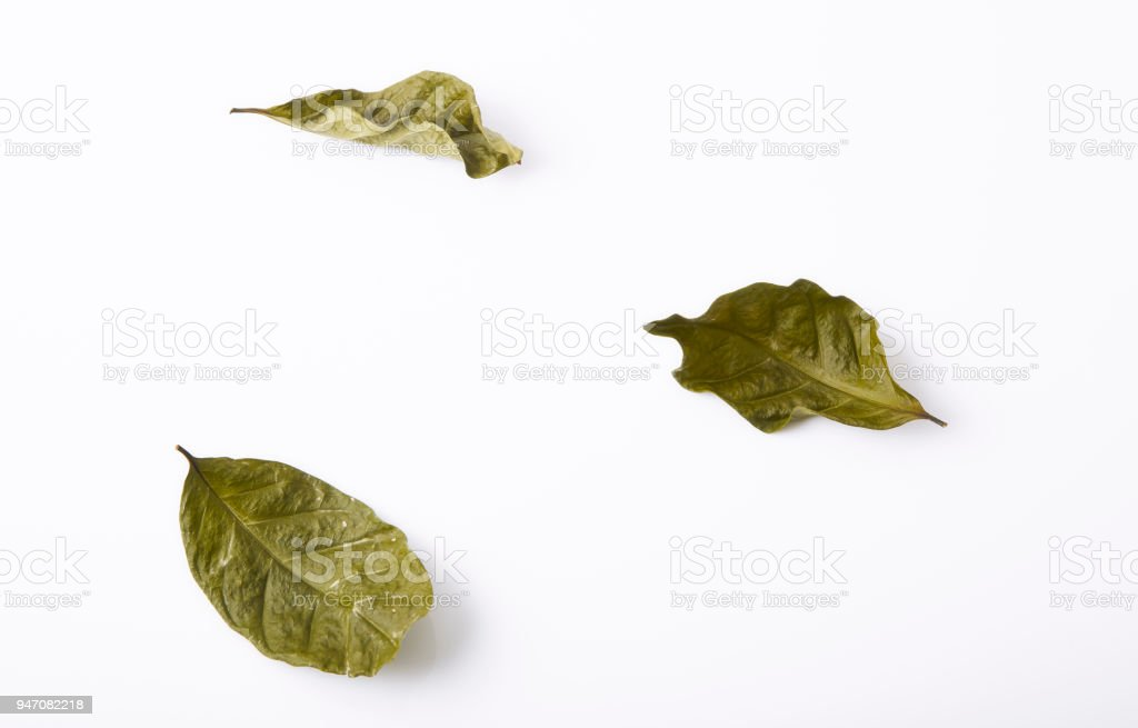 Dry green leaves simply placed on a white background stock photo
