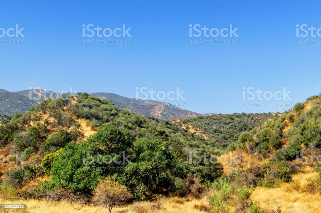 Dry ground below forest fire stock photo