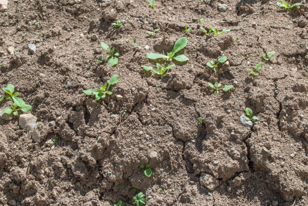 Dry ground texture and small number of plants on daylight in nature stock photo