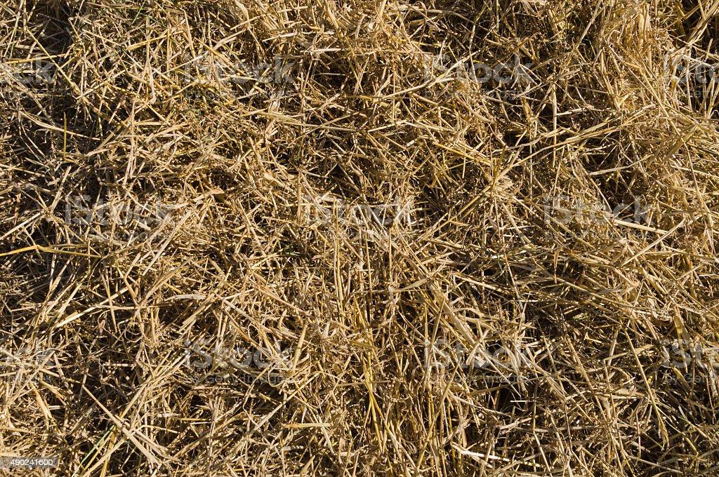 Dry hay Nahaufnahme, Naturstroh Hintergrund – Foto