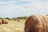 istock Dry hay in a round bale. Close-up with soft warm shadows. 1266014913