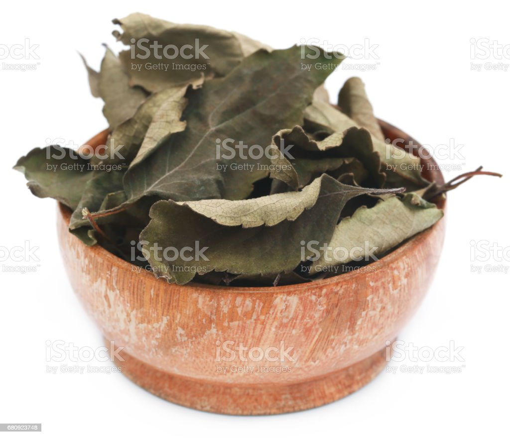 Dry holy basil or tulsi leaves stock photo