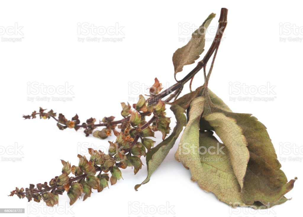 Dry holy basil or tulsi leaves with flower stock photo
