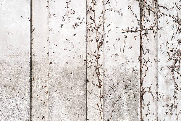 dry ivy branches integrated onto a concrete wall stock photo